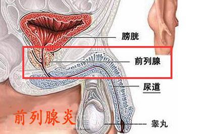 前列腺炎可以直接打针到前利腺消炎吗?「解答」