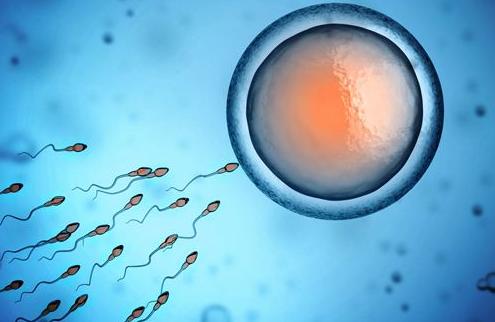 精子活性低怎么办?医生建议多吃这4种食物